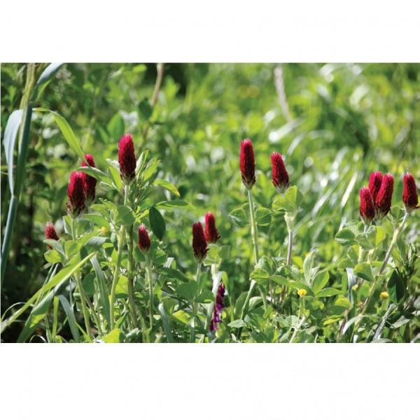 100 m² Blühstreifen für die Artenvielfalt